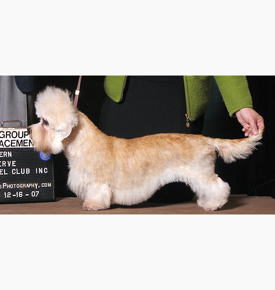 2007 DDTCA National Specialty Best of Breed